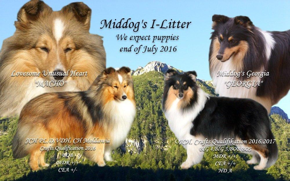 I-Litter_Middogs
